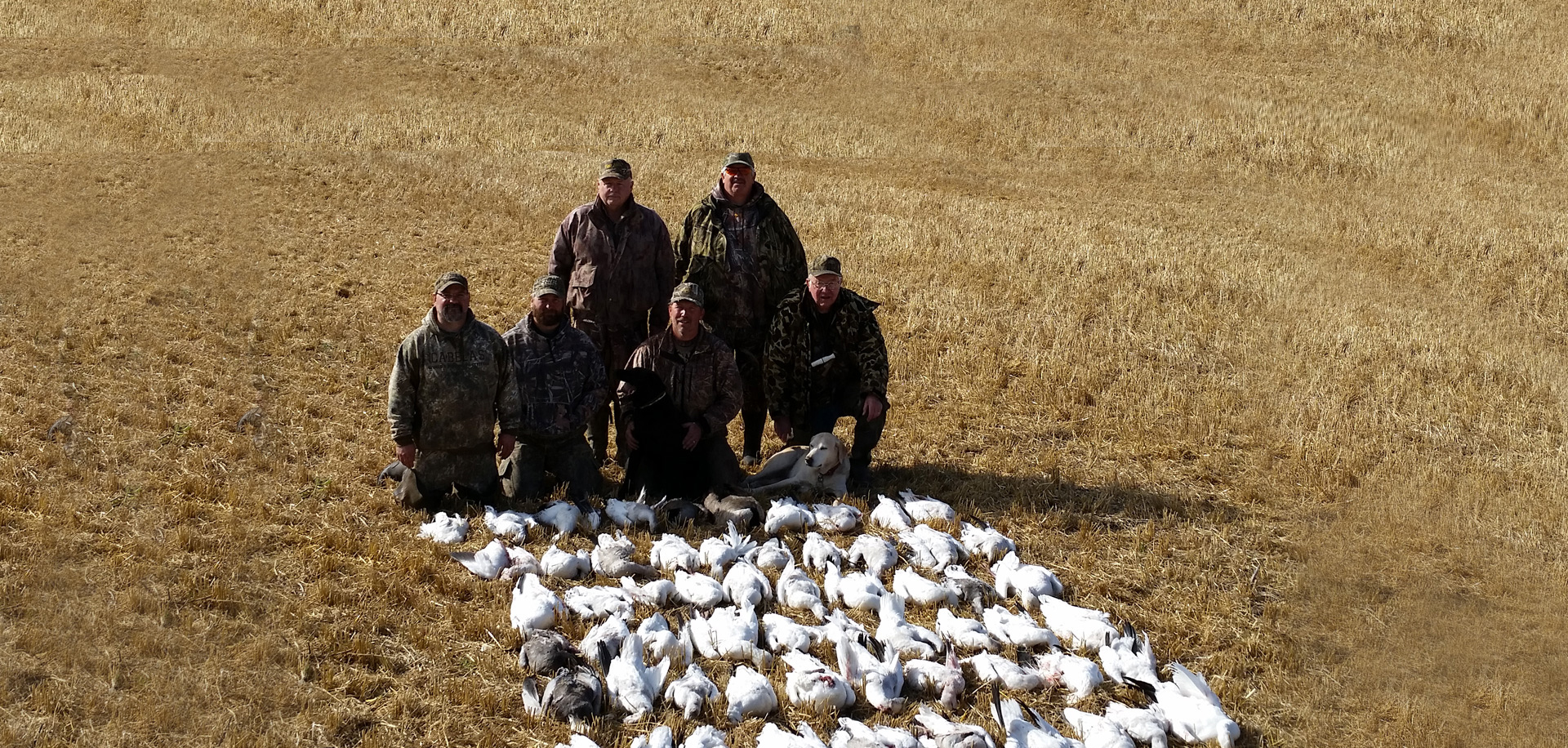 Snow Goose Hunts in SK