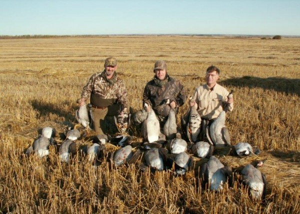 Hunting Canada Geese